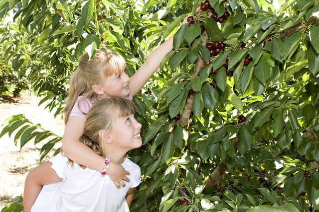 Cherry Picking